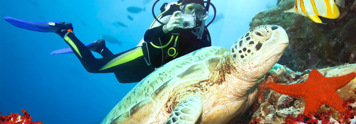 Diving with Turtles and get up close to marine life,