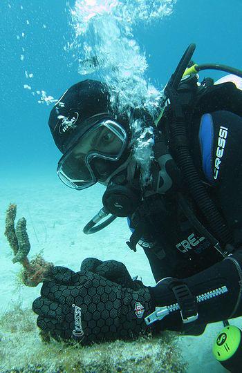 De Costa Bay Dive Spot in Protaras is great for sealife