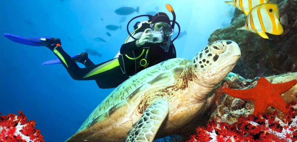 Diving with Turtles in Cyprus