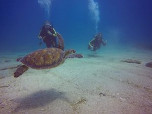 turtles in cyprus #easydiverscyprus