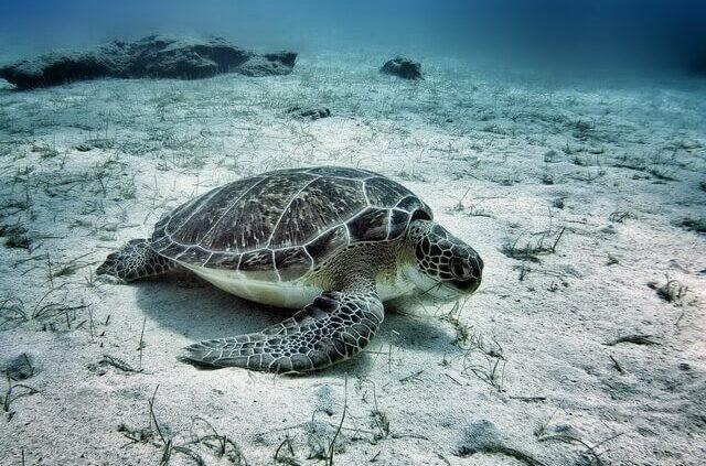sea turtles in Cyprus