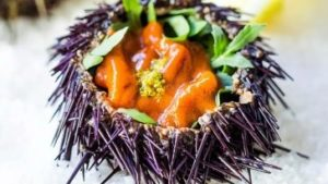 eating sea urchins