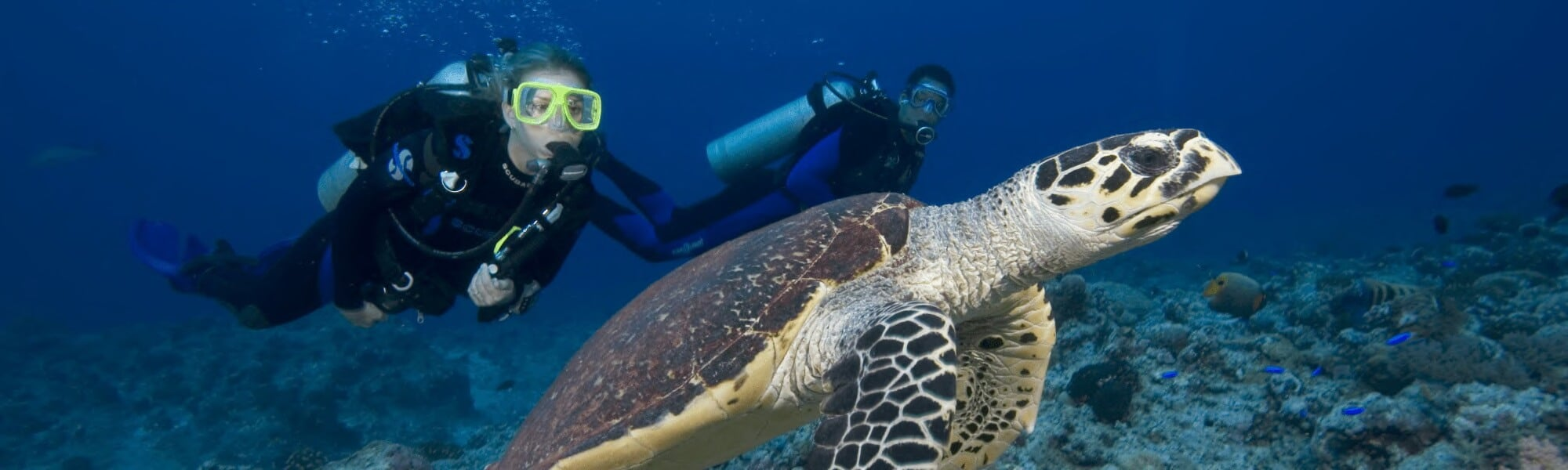 turtle easy divers cyprus