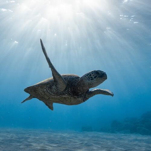 Turtle Cyclops Cyprus